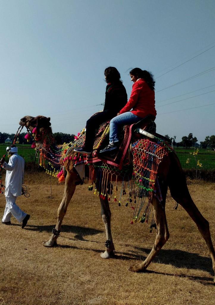 camel riding delhi