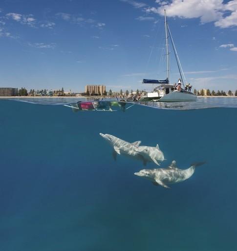 dolphins south australia